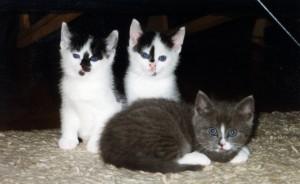 Kittens Lotte op kleed