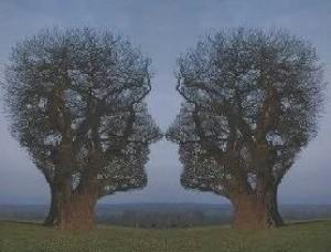 Bomen gezichten
