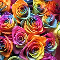 Geur rozen