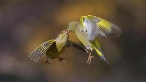 loslaten, kussende vogels, ruimte voor ziel, ritueel
