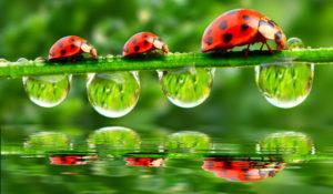 Natuur, dorstige plant, nestjes vogels, relax