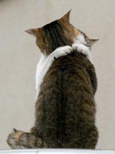 kattige samenwerking, kattensamenwerking, oude bes