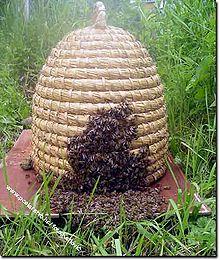 tweehonderdvijftig, 250, bijenkorf